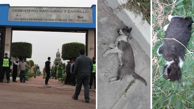 gatitos asesinados en baquijano y carrillo del callao