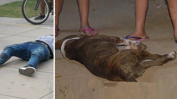 prensa la eskina callao perro pitbull asesinado por sicarios en la perla parque santa elena